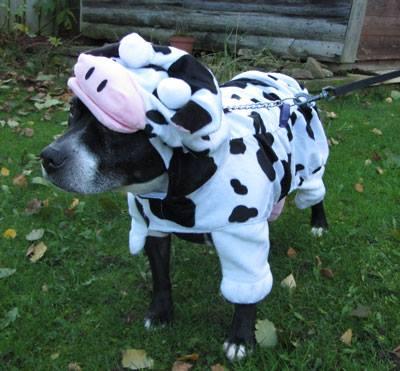 bess cow