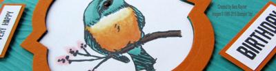a happy thing bird close up